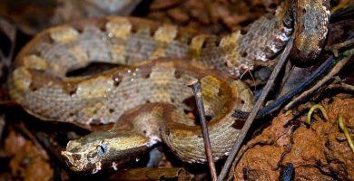 Persiguiendo serpientes en el Parque Nacional Piedras Blancas